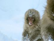 snowmonkey4